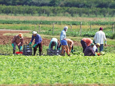 Sottoscritto il protocollo sperimentale contro il caporalato e lo sfruttamento lavorativo in agricoltura per l'annualità 2021