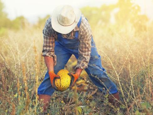 Immagine Prevenzione lavoro irregolare e caporalato in agricoltura