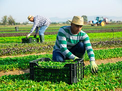 Campagna Eu-Osha disturbi muscoloscheletrici in agricoltura