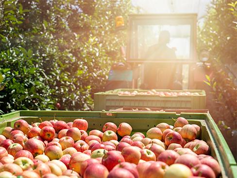 Macchine agricole raccoglifrutta