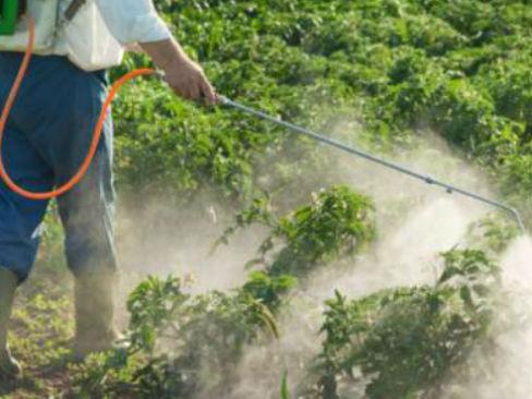 Lavoratori agricoli nelle serre